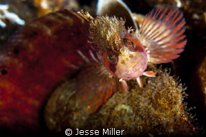 Mosshead Warbonnet by Jesse Miller 
